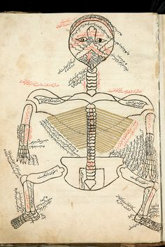 The Anatomy of the Human Body, 1386; copied mid-1400s  Mansur ibn Muhammad ibn Ahmad ibn Yusuf ibn Ilyas  The skeleton depicted above from this early book of anatomy is viewed from the back with the head hyperextended so that the mouth is at the top of the page—a posture suggestive of a dissection table. Squatting figures such as this were the dominant model for anatomical illustration in the Islamic world until the introduction of European models.