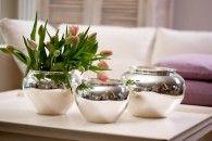 Versilberte Übertöpfe sind die Allrounder für Blumen und Pflanzen