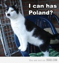 Cute Animal Memes Cat Memes Quotes Meet The Kitlers Cats That Look Like Dictator Adolf Hitler Mustache Included News Mashable 15 Best Cat Memes Ever Best Cat Memes, Funny Animal Memes, Funny Cats, Funny Animals, Cute Animals, Silly Cats, Animal Funnies, Funny Cat Photos, Funny Captions