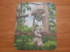 Who loves kittens?  Mouse Pad  Kittens by WildlandCreations on Etsy  $6.50