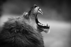 The King by Hamish Mitchell on 500px
