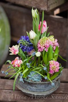 Tulips (single & double), hyacinths, muscari and hens-and-chicks.