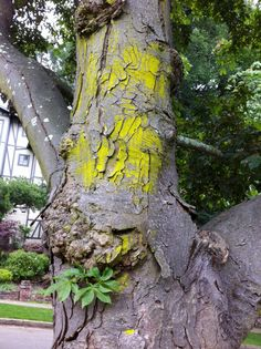 tree in piedmont, iphonography, mnkaz