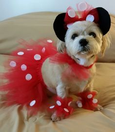 Charlie 2017 Best Dog Costumes, Puppy Halloween Costumes, Puppy Costume, Pet Costumes, Dog Tutu, Cute Dog Pictures, Dog Clothes Patterns, Dog Crafts, Girl And Dog