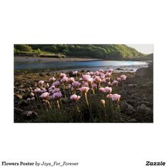 Search for customizable Pretty posters & photo prints from Zazzle. Check out all of the spectacular designs or make your own! Poster Prints, Mountains, Pretty, Travel, Design, Products, Viajes, Destinations, Bergen