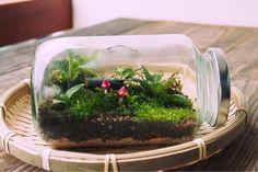 5 indoor plants that survive in low light