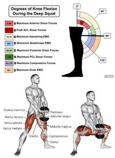 12++ Deep squats muscles used trends