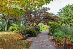 #autumn #fallcolors #travel #butchartgardens #naturephotography #trees #landscape #gardenpath