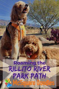 Roaming the Rillito River Park Path: Loop between Brandi Fenton Memorial Park and North Sawn Road in Tucson, Arizona.