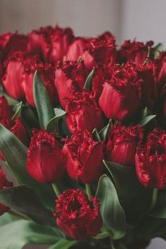 Red Tulips, Red Flowers, Red Roses, Rose Photos, Handfasting, Flower Backgrounds, Free Stock Photos, Photo Wall, Photoshop