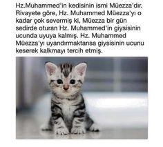 #hadis #resimlihadis #HzMuhammed - corek-otu-yagi.com Allah Islam, Islam Quran, Muhammed Sav, Interesting Information, Fun Comics, Galaxy Wallpaper, Sufi, Quotes About God, Graffiti Art