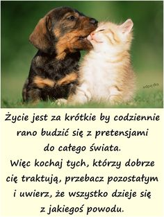 pretensje - demotywatory, besty, kwejki, memy Insprational Quotes, Weekend Humor, Funny Quotes, Life Quotes, Good Advice, Mans Best Friend, Pretty Pictures, Quotations, Psychology