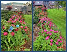 Summer Colour in the Craigatin House Front Garden