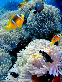 photos merveilleuses animaux marins - World of Animals Life Under The Sea, Under The Ocean, Colorful Fish, Tropical Fish, Sea Anemone, Fish Wallpaper, Marine Fish, Underwater Life, Ocean Creatures
