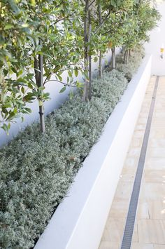 Formed Gardens provides you with a complete range of landscape services including design, construction & maintenance. We have an experienced team of landscape architects, project managers and qualified tradesmen to cater for your project Side Garden, Garden Paths, Garden Landscape Design, Garden Landscaping, Pool Cabana, Landscape Services, Plant Species, Outdoor Plants, Yard Ideas