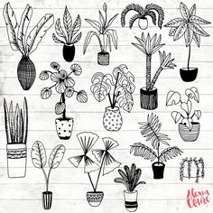 House Plant Clipart  Hand Drawn Plants Clipart  Potted Plant