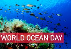 World Oceans Day is June 8th!