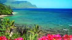 http://ognature.com/wp-content/uploads/2017/04/beach-beaches-hawaii-oceans-hawaiian-flowers-nature-wallpaper.jpg
