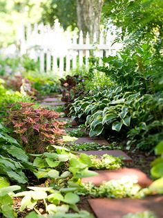 simple pavers create a sense of purpose and destination among a mass of hostas and other foliage plants.