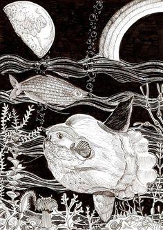 Mondfisch und Regenbogenfisch - 15.01.2016