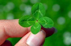 Štvorlístok pre šťastie. Plant Leaves, Plants, Bingo, Amor, Winning The Lottery, Natural Disasters, Day Planners, Genetics, Plant