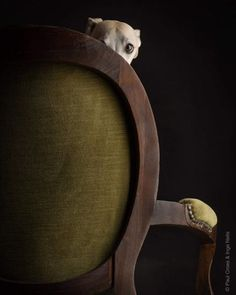 Another #chair and the #intruder #photography by #paulcroes and #ingenelis #dogsofinstagram #instadog