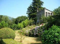 villa Nessi - hidrangee