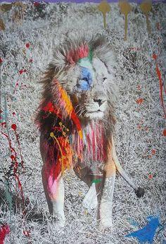 lion- Arno Elias
