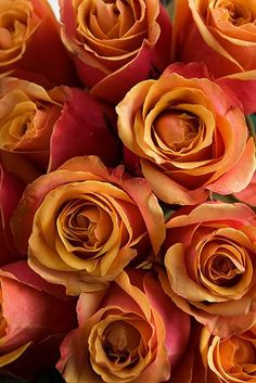 'Cherry Brandy' roses, in shades of orange and peach and pink