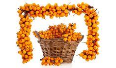 Obsah vitamínu C má daleko vyšší než černý rybíz, pomeranče nebo kiwi, cenné látky vněm najdete ve vysokém množství a navíc videálním poměru. Ten zaručuje, že rakytníkový koktejl využije tělo bezezbytku a jeho obranyschopnost výrazně posílí.