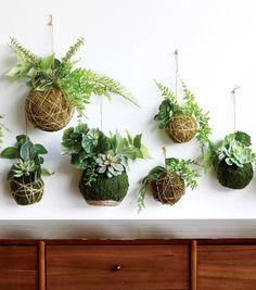 Embarrassingly Easy DIY Kokedama Tutorial (Faux Options, too! String Garden, Inside Plants, Free Plants, Diy Garden Projects, Ikebana, Indoor Plants, Hanging Plants, Houseplants, Greenery