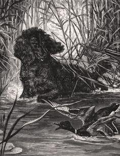 DOG Irish Water Spaniel Hunting Duck, Large 1870s Antique Engraving Print  | eBay