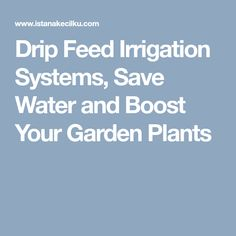 Drip Feed Irrigation Systems, Save Water and Boost Your Garden Plants