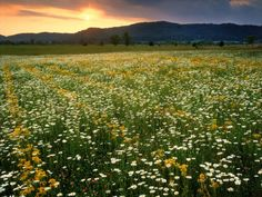Best Hikes For Wildflower Lovers