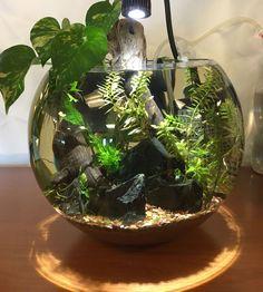 Fish Tank Terrarium, Aquarium Terrarium, Terrarium Plants, Aquarium Garden, Planted Aquarium, Aquascaping, Aquariums, Bonsai, Indoor Water Garden