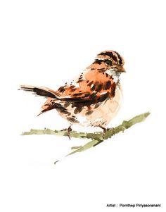 Sparrow Bird  Bird watercolor painting watercolor Bird