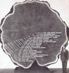 [Mystère #83] L'arbre de Mark Twain
