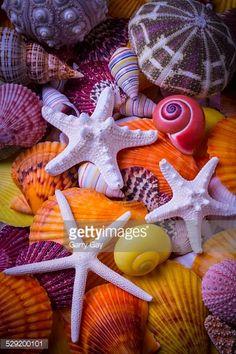 Three white starfish among colorful sea shells, a beautiful collection of marine life. Paradis Tropical, Seashell Painting, Shell Beach, Shell Art, Color Of Life, Ocean Life, Marine Life, Sea Creatures, Starfish
