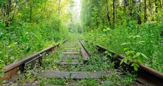 41665047-Abandoned-railroad-overgrown-with-green-plants-in-the-forest--Stock-Photo.jpg (1300×692)