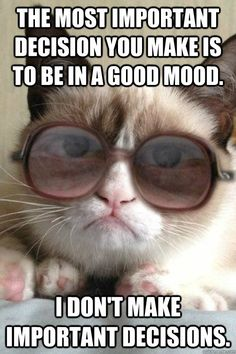 Grumpy cat, grumpy cat meme, grumpy cat humor, grumpy cat quotes, grumpy cat funny …For the best humour and hilarious jokes visit www. Gato Grumpy, Grumpy Cat Meme, Grumpy Cat Quotes, Cat Memes, Grumpy Kitty, Funny Animal Memes, Funny Animals, Mean Cat, Funny Cute