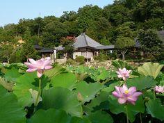 Seishin-ji #mihara #hirosima