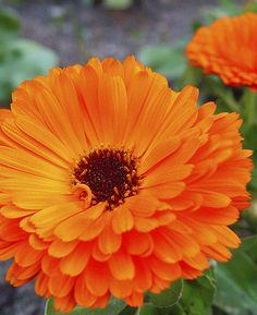 Koninklijke bloemen