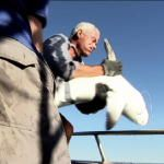 River Monsters: Shark Catches!