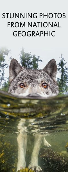 Let's bring back the National Geographic best photos of the year and look at the stunning beauty of nature. These images will inspire you to bring your photography skills to the next level.