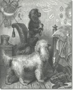 German etching of poodles