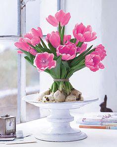Strauss aus Tulpen und Tulpenzwiebeln