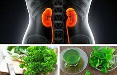 Las 3 mejores infusiones para mejorar tu función renal