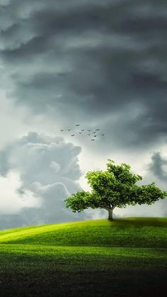 The Tree is calling, The Birds are singing their song. All is well in Heaven above. Landscape Art, Landscape Photography, Nature Photography, Scenery Pictures, Nature Pictures, Beautiful Nature Wallpaper, Beautiful Landscapes, Hd Nature Wallpapers, Beautiful Places