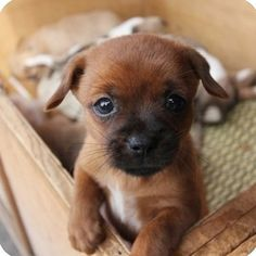 Researchers at Hiroshima University have concluded that looking at pictures of baby animals improves productivity. Cute Puppies, Cute Dogs, Dogs And Puppies, Cute Babies, Baby Puppies, Baby Dogs, Cute Little Animals, Adorable Animals, Tier Fotos