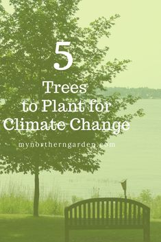 Urban gardeners should choose trees with climate change in mind. Here are 5 recommended by the St. Cold Climate Gardening, The St, Garden Tips, Trees To Plant, Climate Change, Urban, City, Plants, Tree Planting